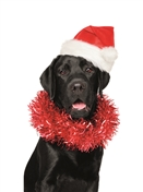 7570BX CH Black lab as Santa