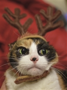 7574BX CH Cat as reindeer