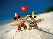 8147 VL Starfish valentine couple