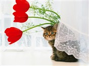8149 VL Cat & red tulips on window