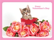 8155 VL Cat in pot with pink roses