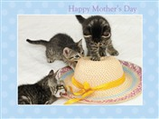 8539 MD Three kittens & straw hat