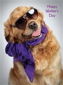 8543 MD Dog in shades and scarf