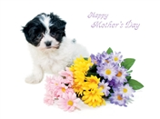8548 MD Puppy, flowers