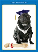 8833 GD Dog in cap & gown, chew toy