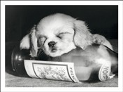 9311 NC Dog asleep on wine bottle