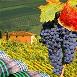 Chianti Wine Region - This tour visits the Chianti Wine Region where you have the chance to explore small medieval villages and sample Tuscan wines as you travel