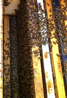 bee nucs for sale