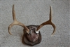 Antler Mounting Kit