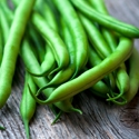 Bean - Contender Bush Green Bean  | The Good Seed Company