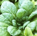 bloomsdale asian personals Flower seeds (13) asian greens (1) beans (1)  singles and doubles dainty foliage and dwarfed habit, good for smaller spaces  winter bloomsdale og yes spinach .
