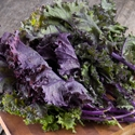 Kale - Red Russian | The Good Seed Company
