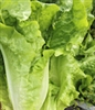 Lettuce - Romaine - Parris Island | The Good Seed Company