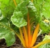 Swiss Chard - Golden | The Good Seed Company