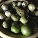 Tomatillo - De Milpa | The Good Seed Company