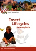 Insect Lifecycles Metamorphosis DVD