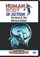 Human Body In Action: The Brain & The Nervous System
