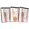 Just the Facts: The Human Body DVD (3 Pack)