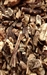 BLACK COHOSH RAW HERB 1 oz.