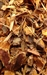 BUCKTHORN BARK RAW HERB 1 oz.
