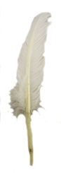 White Feather Quill