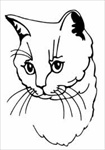 British Cream Cat memorial graphic