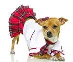 School Girl Puppy Costume