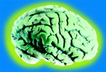 Glow in the Dark Brain - Decoration