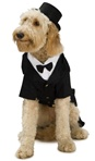 Pets - Dapper Dog Costume