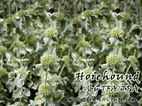 Horehound Flavor by TFA or TPA
