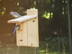 Bluebird House with Viewing Window
