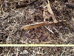 Mulch, Coarse Bulk Pine or Oak