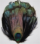 Lady Amherst Natural Black Iridescent Pheasant Feather Pad