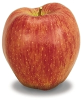 Organic Apple Of The Month Club, Gourmet Apple Of The Month Club, Organic Monthly Fruit and Snacks Club, Organic Fruit of the month clubs, Organic Fruit Club, Organic Monthly fruit club, Mail order organic fruit club, Organic fruit club review, organic