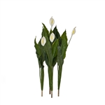 AWPL41 Artificial White Calla Plant