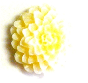 2pc resin cabochon chrissie flowers 22mm butter