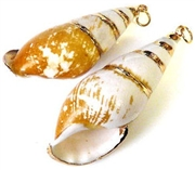 1pc shell charm long verigated gold plated