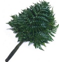 Wholesale Bulk Discount Wholesale Leather Leaf (Baker) Fern