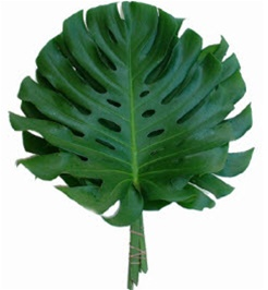 Tropical Greenery Stock Photos - Image: 20962413