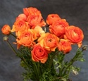 Online Wholesale Bulk Discount Cut Ranunculus -  Orange