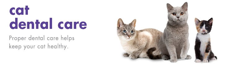cat dental care products   petkin
