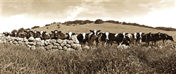 19 Cows giclee canvas by Don Schimmel
