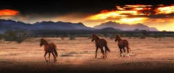 Indian Ponies- Horses Running giclee canvas by Don Schimmel