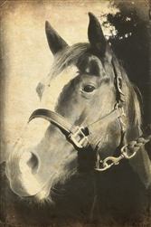 Mare Horse in Sepia Canvas by Hal Halli