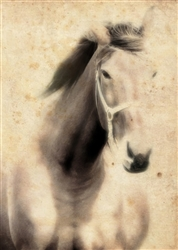 Stallion Horse in Sepia Canvas by Hal Halli