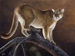 "MOUNTAIN LION & JACKPINE BY DES McCAFFREY 19"" X 25.5"" Ltd. Edition Canvas Giclee"