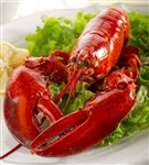 Live 1.5 lb Maine Lobster