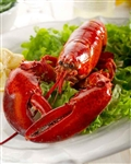 Live 1.1 lb Maine Lobster