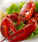 Live 2.0 lb Maine Lobster