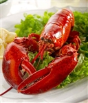 Live 1.25 lb Maine Lobster